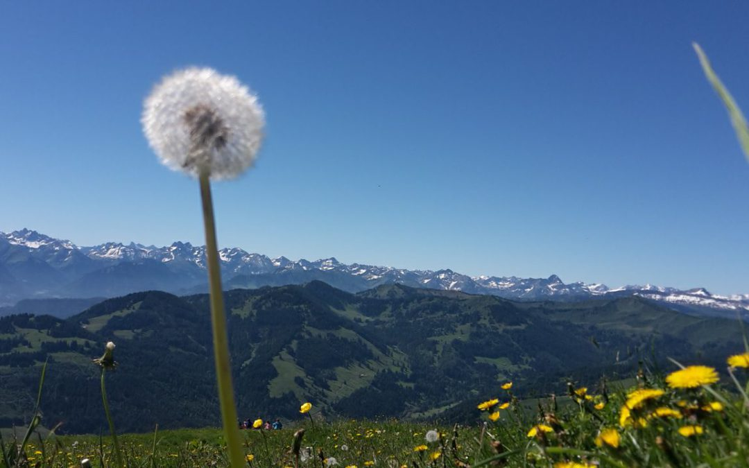 Yoga am Berg – Natur pur!