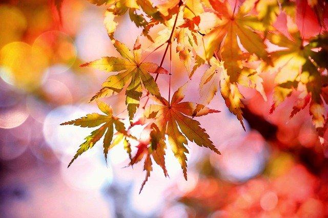 Gesund bleiben im Herbst!!!